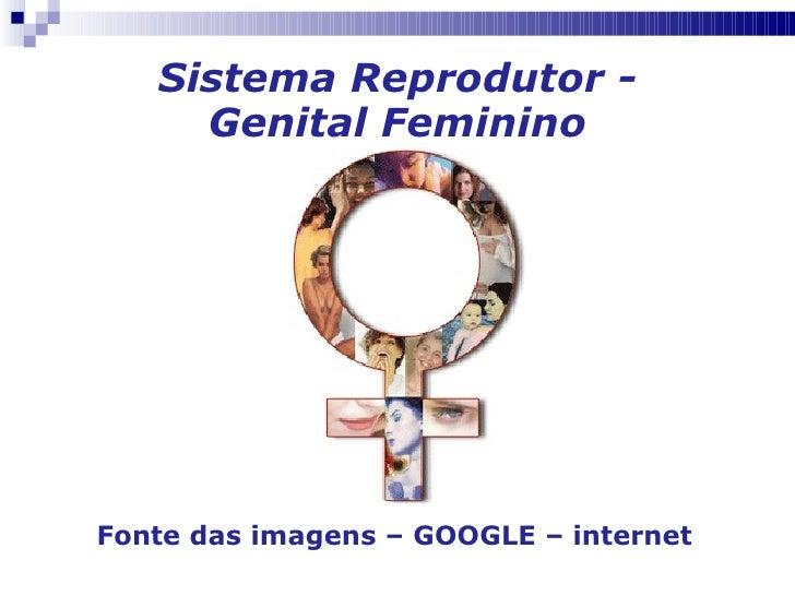 Sistema Reprodutor - Genital Feminino Fonte das imagens – GOOGLE – internet