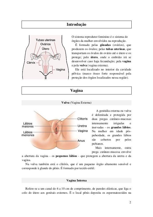 Sistema Reprodutor Feminino Slide 2