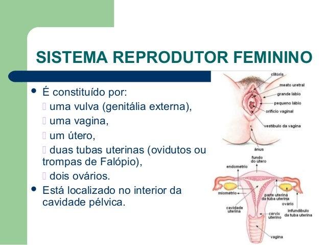 Sistema reprodutor feminino49 e 51 Slide 2