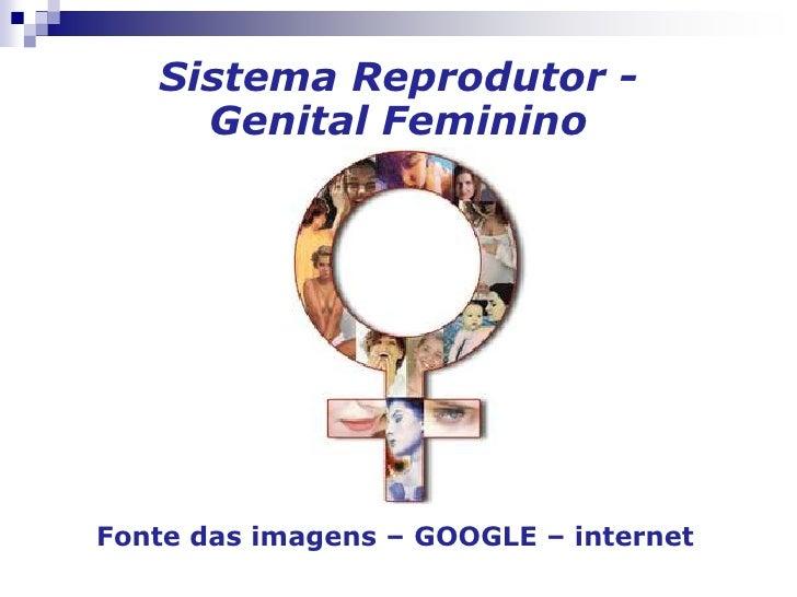 Sistema Reprodutor -Genital Feminino<br />Fonte das imagens – GOOGLE – internet<br />