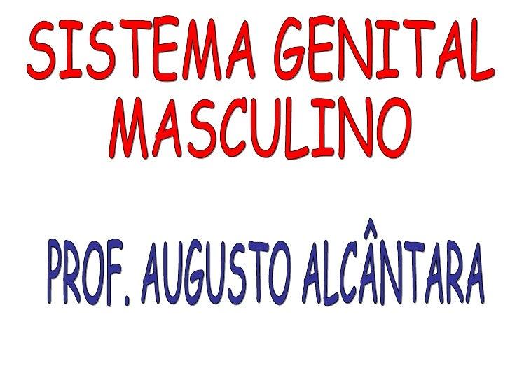 PROF. AUGUSTO ALCÂNTARA SISTEMA GENITAL MASCULINO