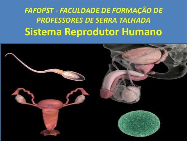 FAFOPST - FACULDADE DE FORMAÇÃO DEPROFESSORES DE SERRA TALHADASistema Reprodutor Humano