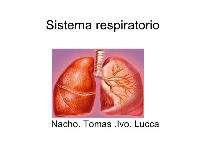 Sistema respiratorio Nacho. Tomas .Ivo. Lucca