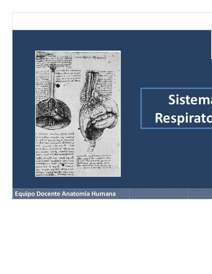 Sistema                                 RespiratorioEquipo Docente Anatomía Humana