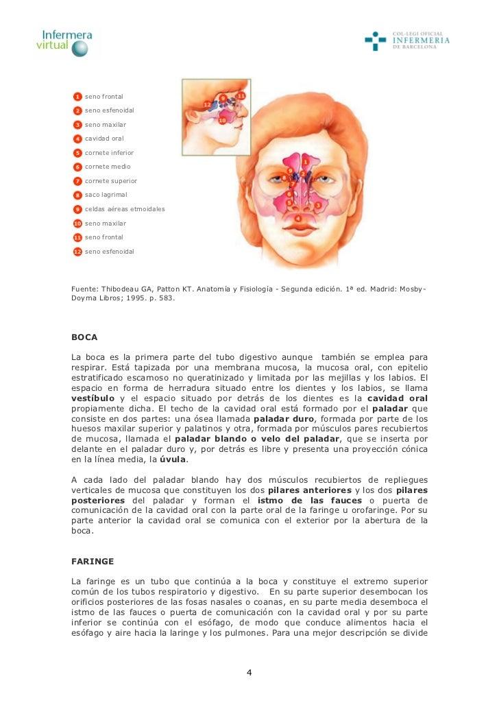 Famoso Anatomía Y Fisiología Octava Edición Por Patton Y Thibodeau ...