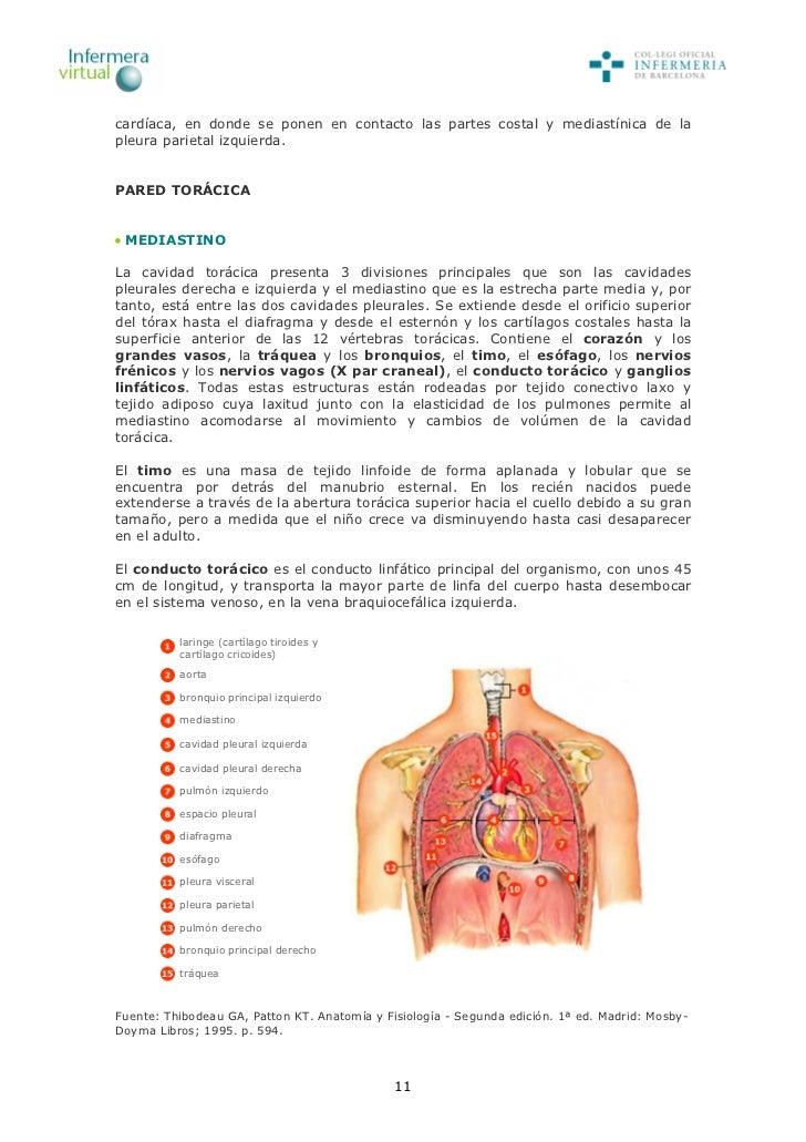 Lujoso Anatomía Y Fisiología Octava Edición Por Patton Y Thibodeau ...
