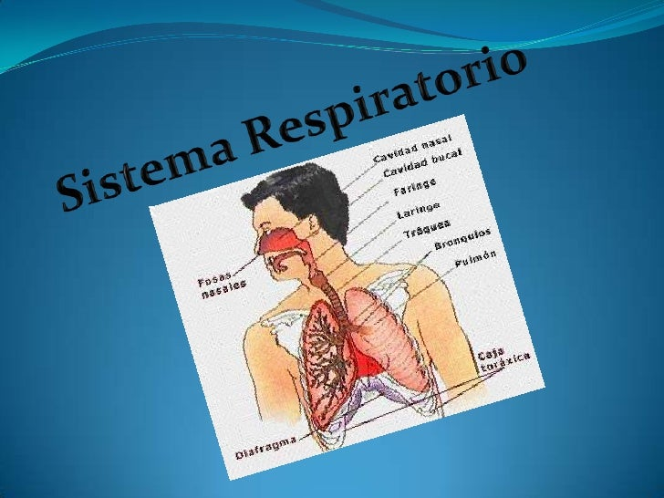 Sistema: es un grupo de órganos asociados que concurren enuna función general y están formados predominantementepor los mi...