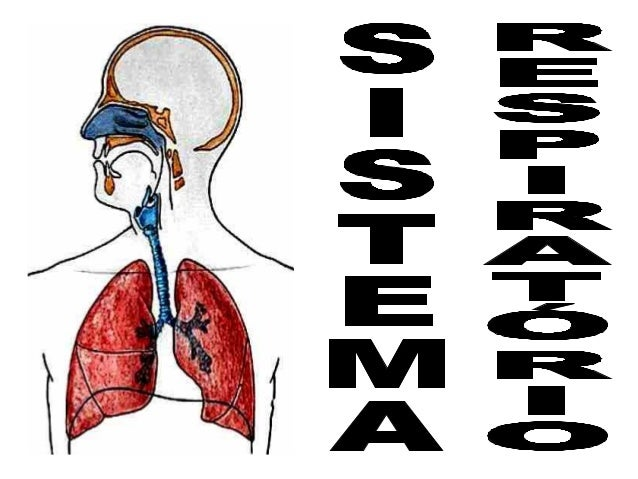 INTRODUÇÃO A respiração pode ser interpretada como:  - processo de trocas gasosas entre o organismo  e o meio. - conjunto ...
