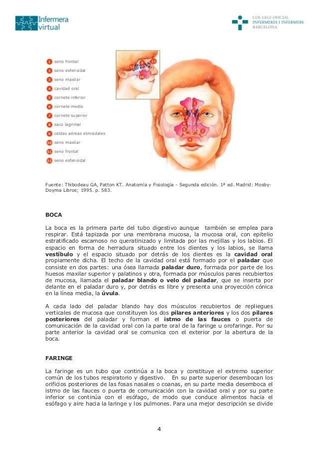 Contemporáneo Patton Y La Anatomía Y La Fisiología Thibodeau Ideas ...