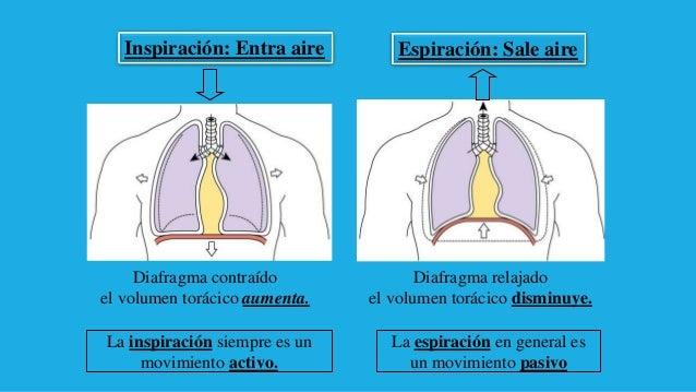 Anatomia y Fisiologia del Aparato Respiratorio