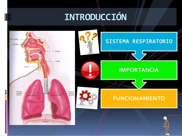 Higiene Del Sistema Respiratorio: Sistema Respiratorio (2) (1
