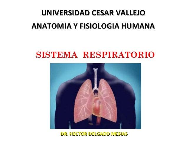 Sistema respiratorio n° 8