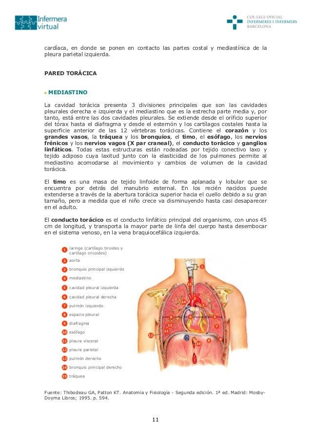 Magnífico Anatomía Y Fisiología Saladino 7ª Edición Pdf Bosquejo ...