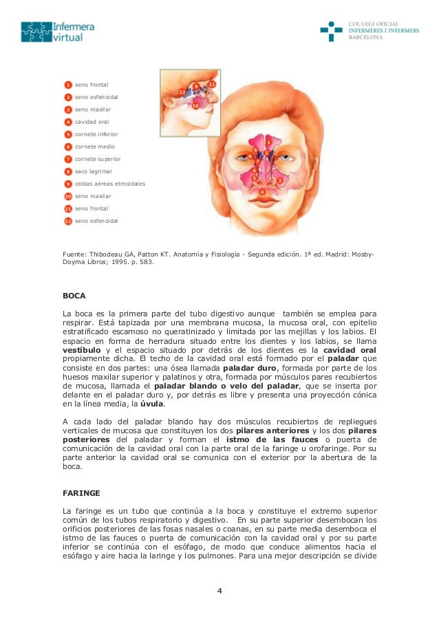 Excelente Anatomía Y Fisiología Octava Edición Por Patton Y ...