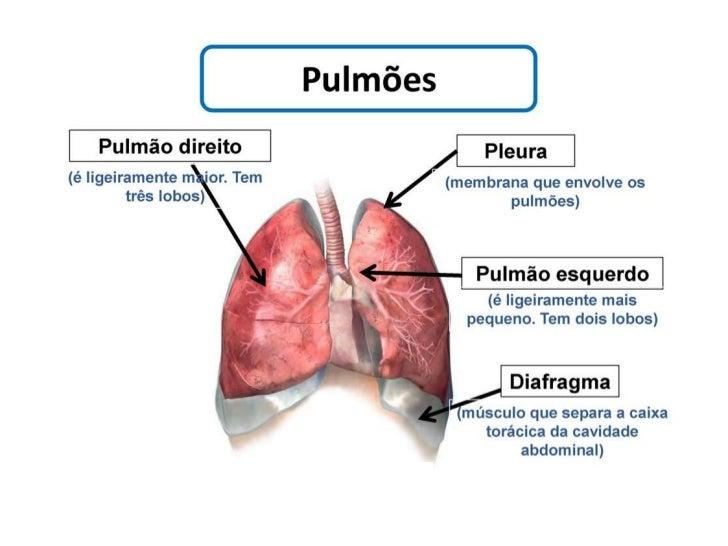 Sistema respiratorio powerpoint