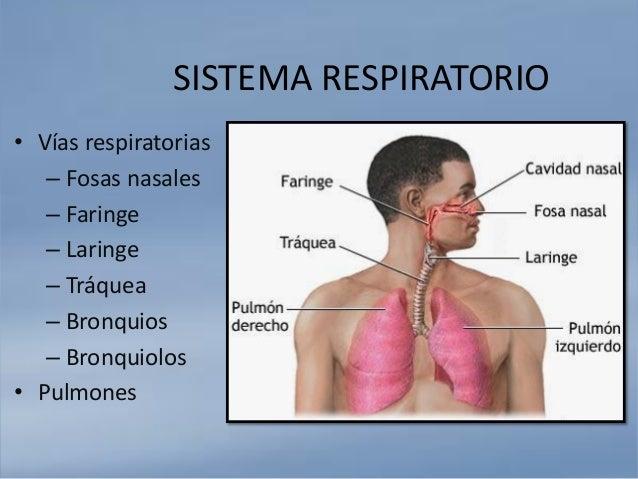 ANATOMIA Y FISIOLOGÍA SABATINO: Sistema Respiratorio y Sistema Cardio…