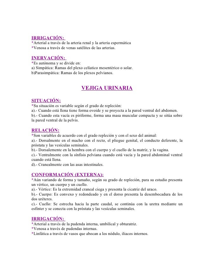 Sistema Respiratorio Y Urinario