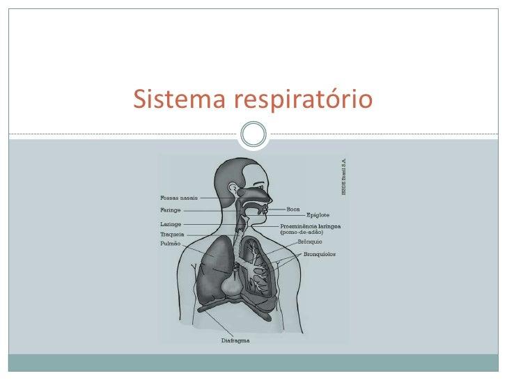 Sistema respiratório<br />
