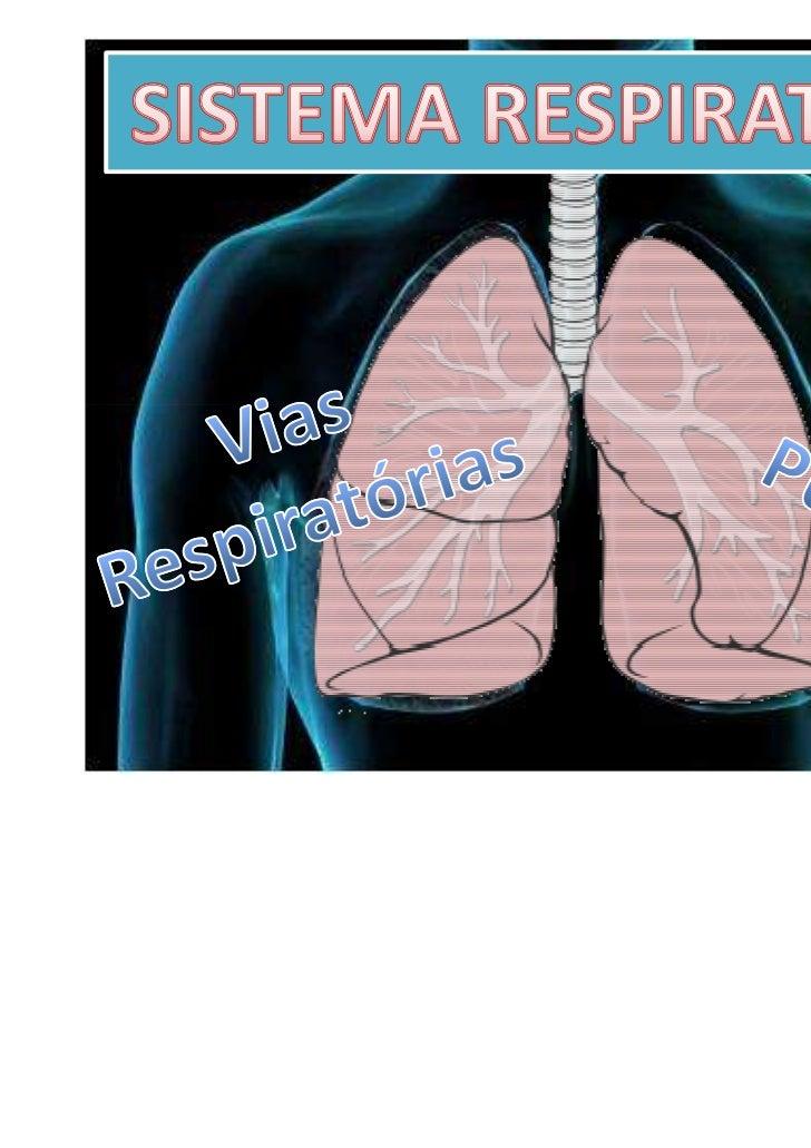 Fossas Nasais                 Faringe       Laringe   Traqueia    BrônquiosPulmão direito   Pulmão esquerdo Bronquíolos