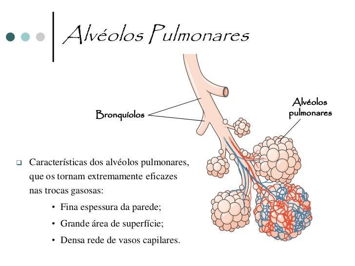Alvéolos Pulmonares                                 Capilar                                sanguíneo                      ...