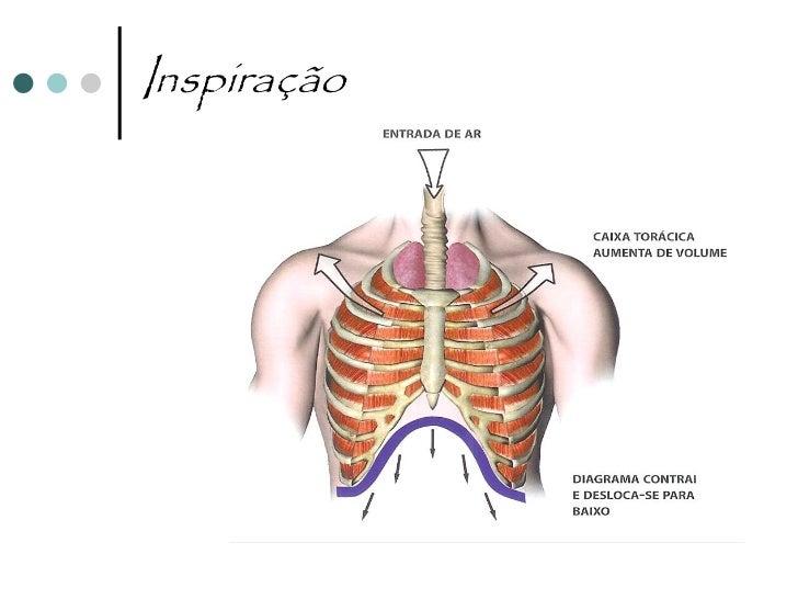 InspiraçãoContracção do diafragma e      O diafragma baixa, as dos músculos intercostais   costelas e o esterno sobem     ...