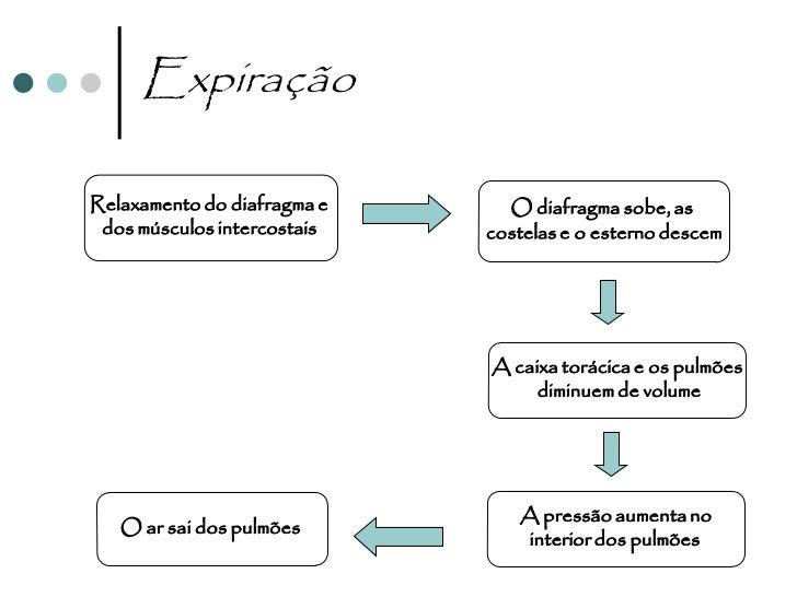 Ciclo respiratório   Conjunto de uma inspiração seguida de uma expiração.   O nº de ciclos respiratórios por unidade de ...