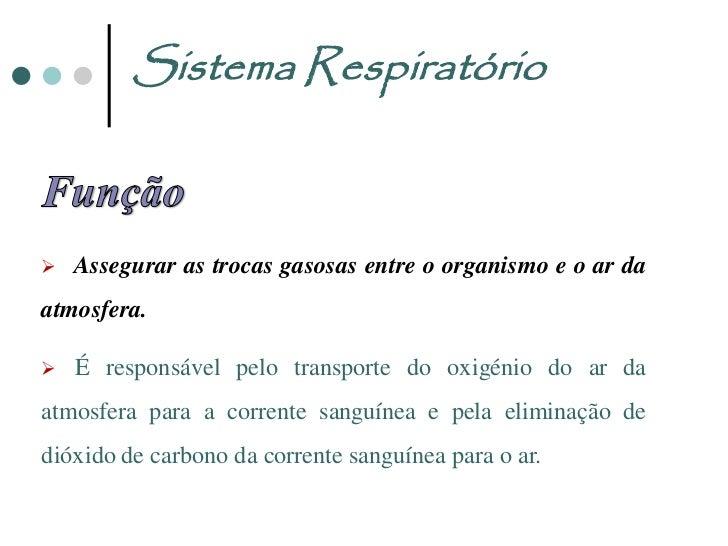 Sistema Respiratório                       Fossas nasais                          Faringe                           Laring...
