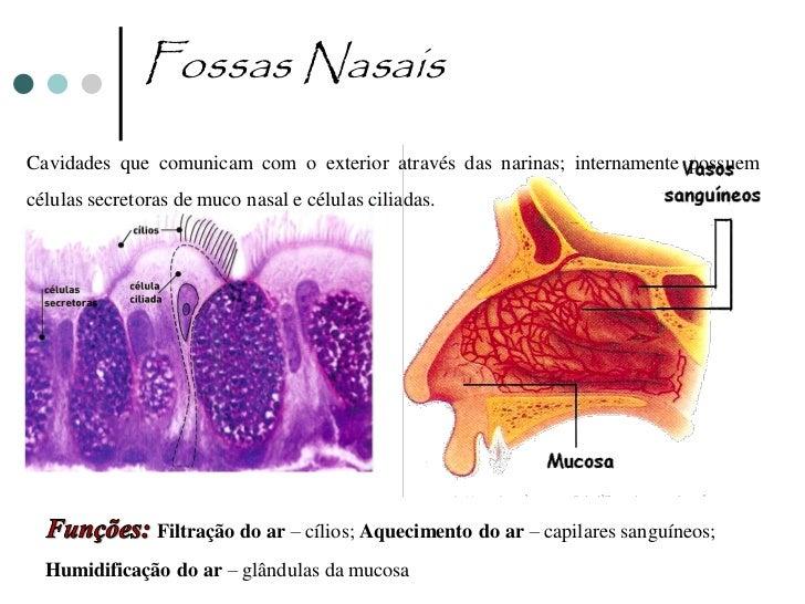 Faringe   Comum aos sistemas respiratório e digestivo, permitindo passagem do bolo    alimentar (sistema digestivo) e do ...