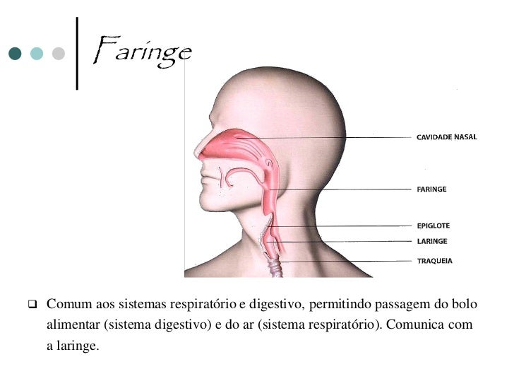 Laringe                                                    Laringe                                                  Traque...