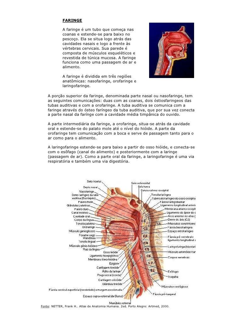 Atrás atlas de músculos de um sinelnikov - Anatomia - Assoalho Pelvico