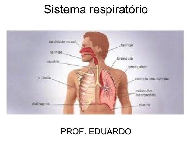 Sistema respiratório   PROF. EDUARDO
