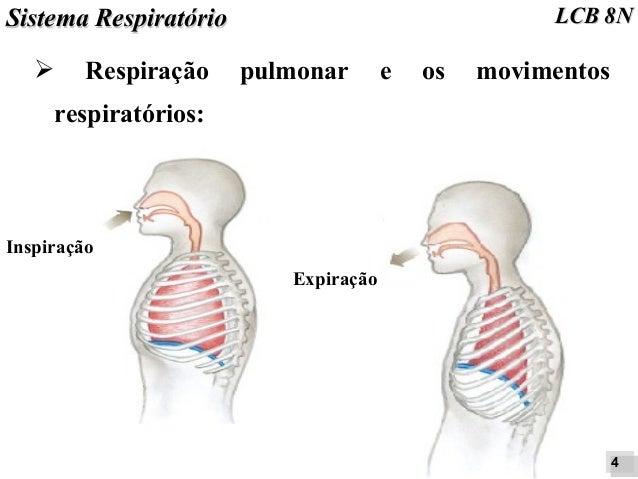 MOVIMENTOS RESPIRATORIOS PDF
