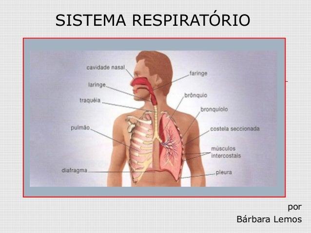 SISTEMA RESPIRATÓRIO por Bárbara Lemos