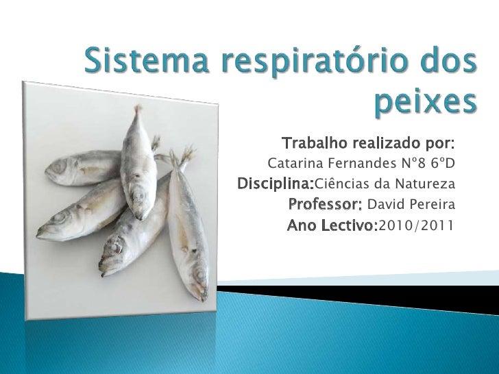 Sistema respiratório dos peixes<br />Trabalho realizado por: <br />Catarina Fernandes Nº8 6ºD<br />Disciplina:Ciências da ...