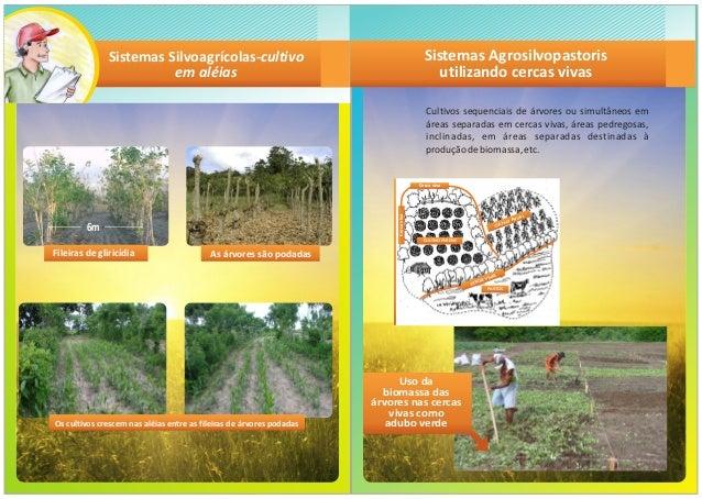apostila Sistemas agroflorestais no semiarido brasileiro Slide 3