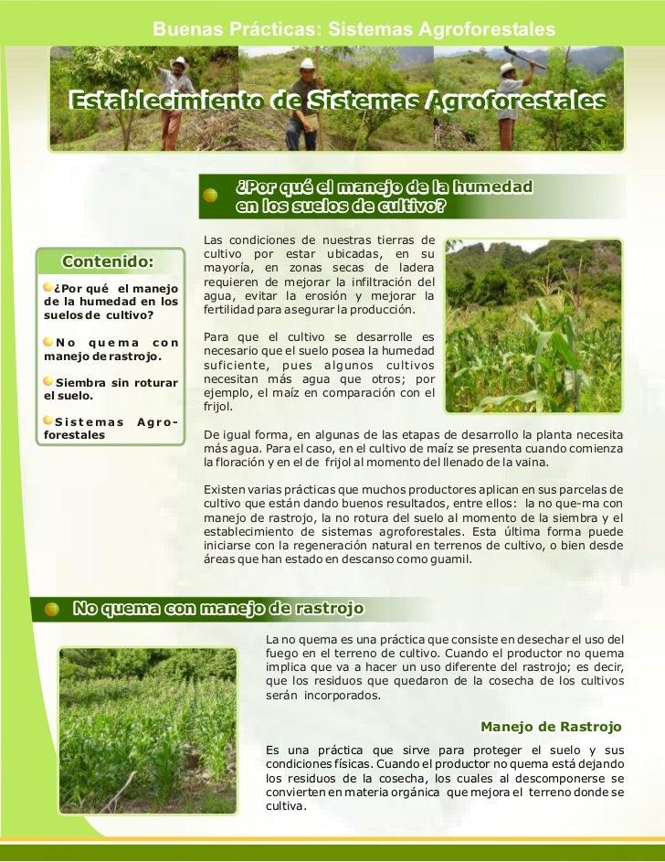 Buenas Prácticas: Sistemas Agroforestales    Establecimiento de Sistemas Agroforestales                             ¿Por q...