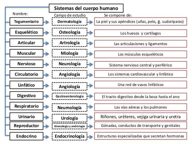 Sistemas organicos humanos
