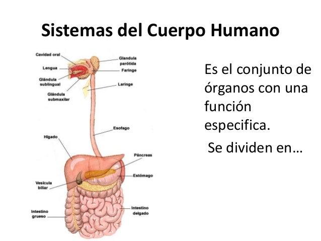 Sistemas cuerpo humano