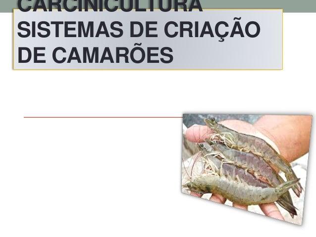 CARCINICULTURA SISTEMAS DE CRIAÇÃO DE CAMARÕES