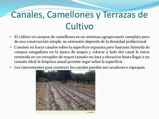 Sistemas De Cultivos