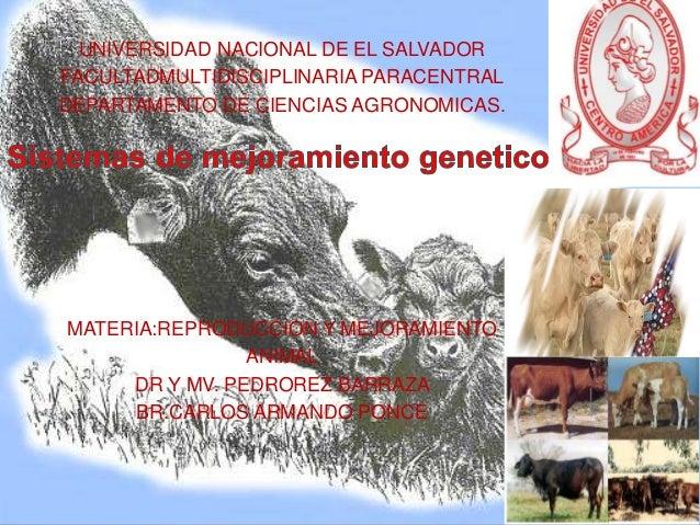 UNIVERSIDAD NACIONAL DE EL SALVADOR FACULTADMULTIDISCIPLINARIA PARACENTRAL DEPARTAMENTO DE CIENCIAS AGRONOMICAS.  MATERIA:...