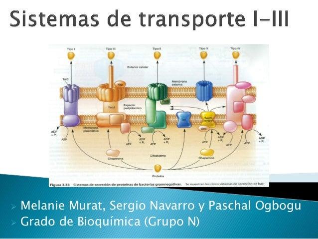 Melanie Murat, Sergio Navarro y Paschal Ogbogu  Grado de Bioquímica (Grupo N) 