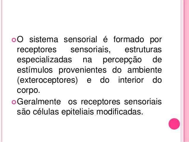 Sistema sensorial   fisiologia Slide 3