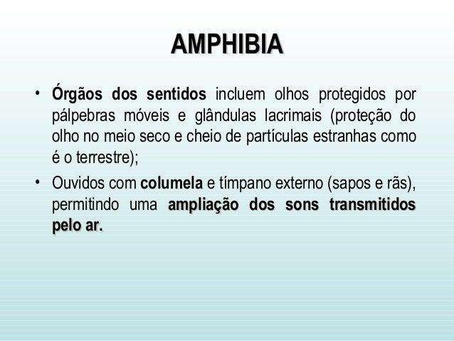AMPHIBIAAMPHIBIA • Órgãos dos sentidos incluem olhos protegidos por pálpebras móveis e glândulas lacrimais (proteção do ol...
