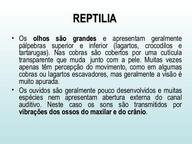 REPTILIAREPTILIA • Os olhos são grandesolhos são grandes e apresentam geralmente pálpebras superior e inferior (lagartos, ...