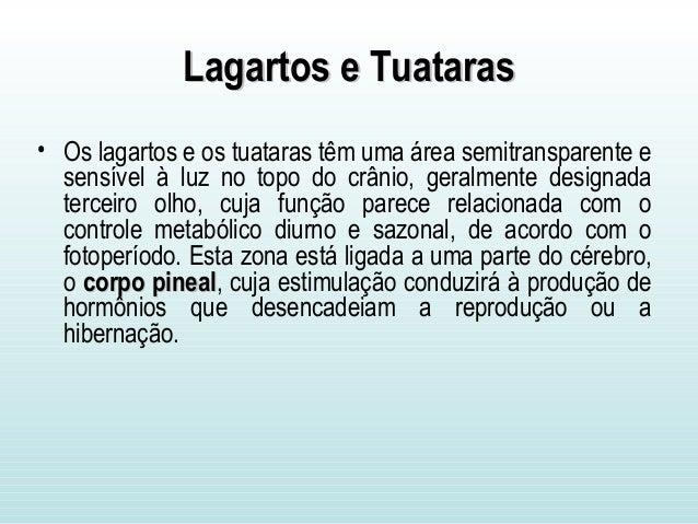 Lagartos e TuatarasLagartos e Tuataras • Os lagartos e os tuataras têm uma área semitransparente e sensível à luz no topo ...