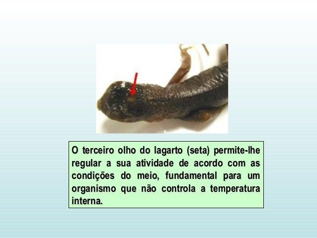 O terceiro olho do lagarto (seta) permite-lheO terceiro olho do lagarto (seta) p...