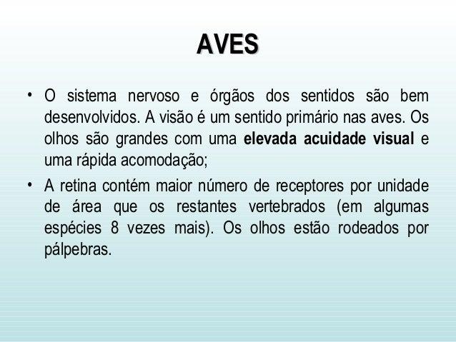 AVESAVES • O sistema nervoso e órgãos dos sentidos são bem desenvolvidos. A visão é um sentido primário nas aves. Os olhos...