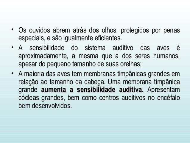 • Os ouvidos abrem atrás dos olhos, protegidos por penas especiais, e são igualmente eficientes. • A sensibilidade do sist...