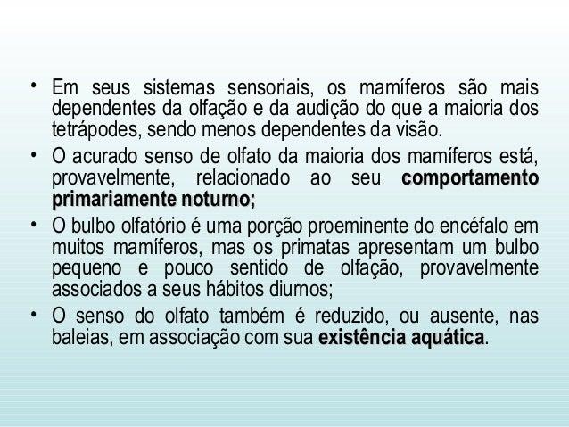 • Em seus sistemas sensoriais, os mamíferos são mais dependentes da olfação e da audição do que a maioria dos tetrápodes, ...